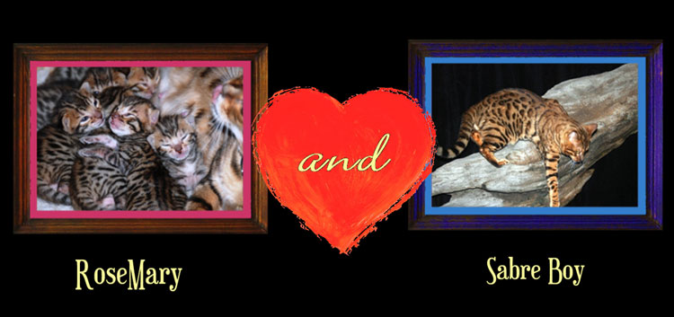 bengal cat couple 3